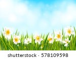 spring background with daffodil ...