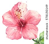 Pink Hibiscus Flower Isolated...
