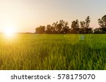 landscape of golden light with... | Shutterstock . vector #578175070