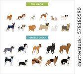 toy and herding dog breeds | Shutterstock .eps vector #578180590