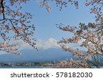 mt fuji and cherry blossoms    Shutterstock . vector #578182030