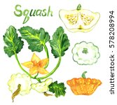 Squash Plant With Flowers ...