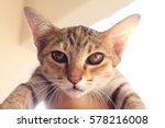 grey cat  | Shutterstock . vector #578216008