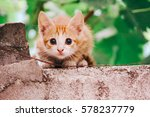 Stock photo kitten 578237779