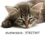 Stock photo sleeping kitten 57827347