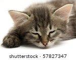 Stock photo sleeping kitten 57827347