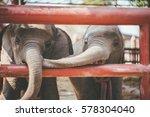Two Baby Elephants Playing...