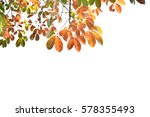 background yellow leaves in... | Shutterstock . vector #578355493