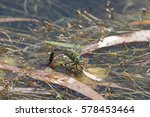 A Large Emperor Dragonfly...