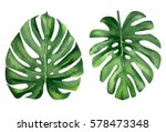 tropical leaves. watercolor... | Shutterstock . vector #578473348
