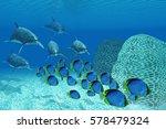 bottlenose dolphins underwater... | Shutterstock . vector #578479324