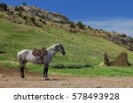 a lone horse stands in the... | Shutterstock . vector #578493928