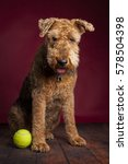 Small photo of Airedale and Tennis Ball
