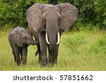 young african elephant touches... | Shutterstock . vector #57851662