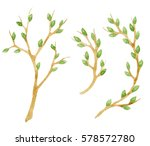 set of branches with green buds ... | Shutterstock . vector #578572780