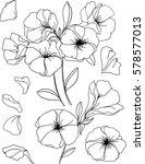 outlined flowers. springtime | Shutterstock .eps vector #578577013