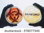 hands hold petri dishes with...