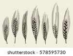 vector hand drawn wheat ears... | Shutterstock .eps vector #578595730