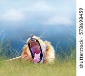 Funny Photo Of African Lion...