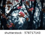 the beauty of nature. landscape ... | Shutterstock . vector #578717143