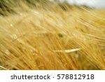 wheat field | Shutterstock . vector #578812918