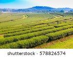 green tea plantation landscape | Shutterstock . vector #578826574