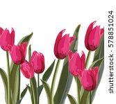 tulip vector illustration on a... | Shutterstock .eps vector #578851024
