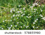 Spring Grass And Flower In A...