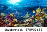 underwater coral reef landscape ... | Shutterstock . vector #578903656