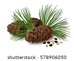 pine cones with nuts and... | Shutterstock .eps vector #578906050