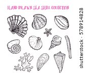 sea shell hand drawn collection.... | Shutterstock .eps vector #578914828