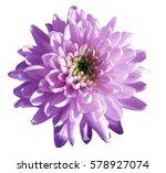 purple pink flower... | Shutterstock . vector #578927074