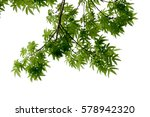 green leaves and branch... | Shutterstock . vector #578942320