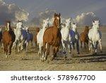 Herd Of Arabian Horses Running...