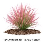 Ornamental Grass Plant Isolate...