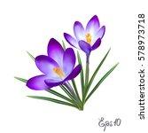 crocus flowers isolated on... | Shutterstock .eps vector #578973718