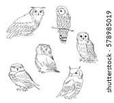 Stock vector collection of images of a owls painted in a realistic style 578985019