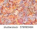 Color Frozen Leaves