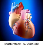 anatomy of human heart on blue... | Shutterstock . vector #579005380