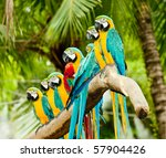 A Group Of Colorful Macaw On...