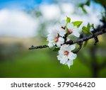 beautiful blooming flowers | Shutterstock . vector #579046420