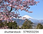 cherry blossoms and mt.fuji | Shutterstock . vector #579053254