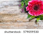 Pink Gerbera Daisy Flower For ...