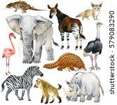 african animals watercolor... | Shutterstock . vector #579083290