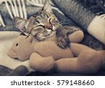 Stock photo gray kitten sleeping on gray plaid wool blanket with tassels embracing soft beige knitted toy 579148660
