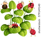 Ladybugs On Green Leaves...