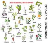 best herbs for menopause... | Shutterstock .eps vector #579199033