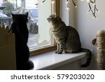 loving cat resting in a cafe   Shutterstock . vector #579203020