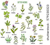 bitter herbs collection. hand... | Shutterstock .eps vector #579230323