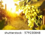 Grapes Fruits And Summer Time